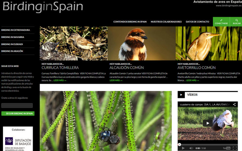 diseño web wordpress ranna consultoria birding in spain